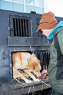 Mats Pettersson tillsammand med hunden Voulos innan den ceremoniella starten av 2017 Iditarod, Anchorage, Alaska, USA