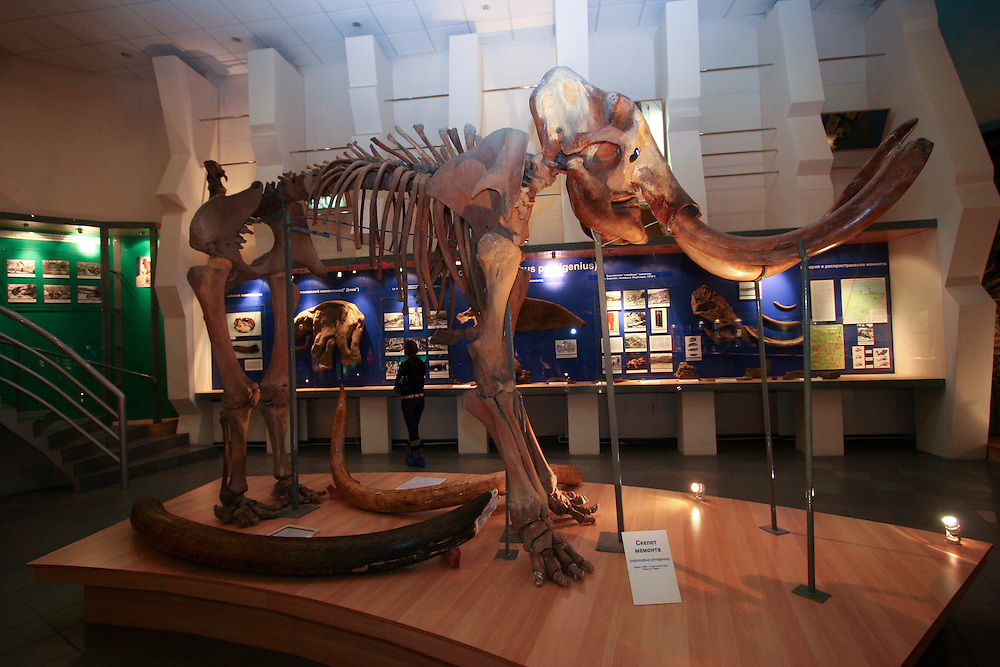 Das im Jahre 1991 gegruendete Mammut-Museum in der sibirischen Stadt Jakutsk. Jakutsk wurde 1632 gegruendet und feierte 2007 sein 375 jaehriges Bestehen. Jakutsk ist im Winter eine der kaeltesten Grossstaedte weltweit mit durchschnittlichen Winter Temperaturen von -40.9 Grad Celsius. Die Stadt ist nicht weit entfernt von Oimjakon, dem Kaeltepol der bewohnten Gebiete der Erde.<br /> <br /> The Mammoth-Museum in the siberian city Yakutsk which was created in 1991 as the scientific and cultural centre on studying of mammoth faunae and its environment in a glacial age. Yakutsk was founded in 1632 and celebrated 2007 the 375th anniversary. Yakutsk is a city in the Russian Far East, located about 4 degrees (450 km) below the Arctic Circle. It is the capital of the Sakha (Yakutia) Republic (formerly the Yakut Autonomous Soviet Socialist Republic), Russia and a major port on the Lena River. Yakutsk is one of the coldest cities on earth, with winter temperatures averaging -40.9 degrees Celsius.