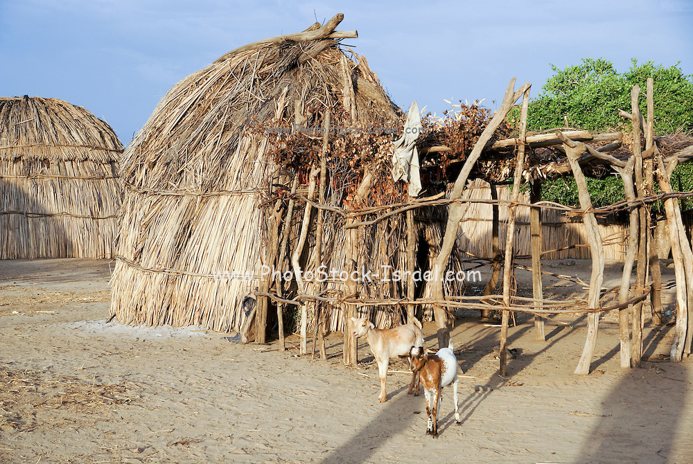 Africa, Ethiopia, Omo valley, the Arbore tribe a straw hut