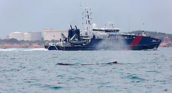 A juvenile Humbpack whale swims past Broome Port in late June 2013.