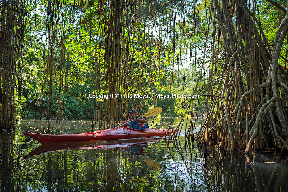 Honduras, May 2014. Kayaking through the mangrove forest of Laguna El Cacao Lagoon near La Ceiba. From the Bay islands on the Caribbean coast, via the lush jungles of the interior to the ancient Mayan culture of Copan, Honduras is one big adventure.  Photo by Frits Meyst / MeystPhoto.com