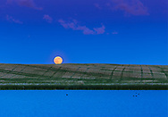 The rising Full Moon of June, dubbed the &ldquo;Strawberry Moon&rdquo; in the media, as seen rising over a prairie pond in southern Alberta, on June 9, 2017.<br /> <br /> This is a single exposure stack, from a time-lapse sequence of 1100 frames, with images taken at two second intervals. Shot with the Canon 6D and 200mm lens.