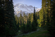 Rainier peaking through meadow and trees - Mount Rainier National Park, WA