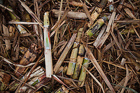 ITUMBIARA, BRAZIL - OCTOBER 16:<br /> Pieces of stalk and sugarcane left on the field to provide nutrients for the soil, near the city of Itumbiara, in Goias state, Brazil, on Wednesday, Oct. 16, 2013. Since the US recently passed a number of regulations and standards for cars and dropped tariffs that were in place for decades against Brazilian sugar, Brazilian ethanol is now flowing to the U.S., and the ethanol industry in the country is consolidating and ramping up for a new era.