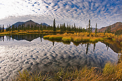 A still arctic lake reflects cirrus clouds and an autumn landscape in the Ogilvie Mountains of the Yukon Territory, Yukon Territory, Canada