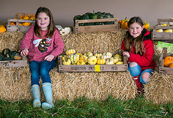 Kilduff Farm, East Lothian, Scotland, United Kingdom, 17 October 2019. Pumpkin Patch: The pick your own pumpkin patch gears up for its opening tomorrow. In its second year, Lucy and Russell Calder and their daughters make final preparations for visitors. The patch is open this weekend and next, selling a variety of Halloween carving pumpkins and culinary pumpkins. Pictured: Louisa (8 years) and Maisie (10 years) with a variety of culinary pumpkins. <br /> Sally Anderson | EdinburghElitemedia.co.uk