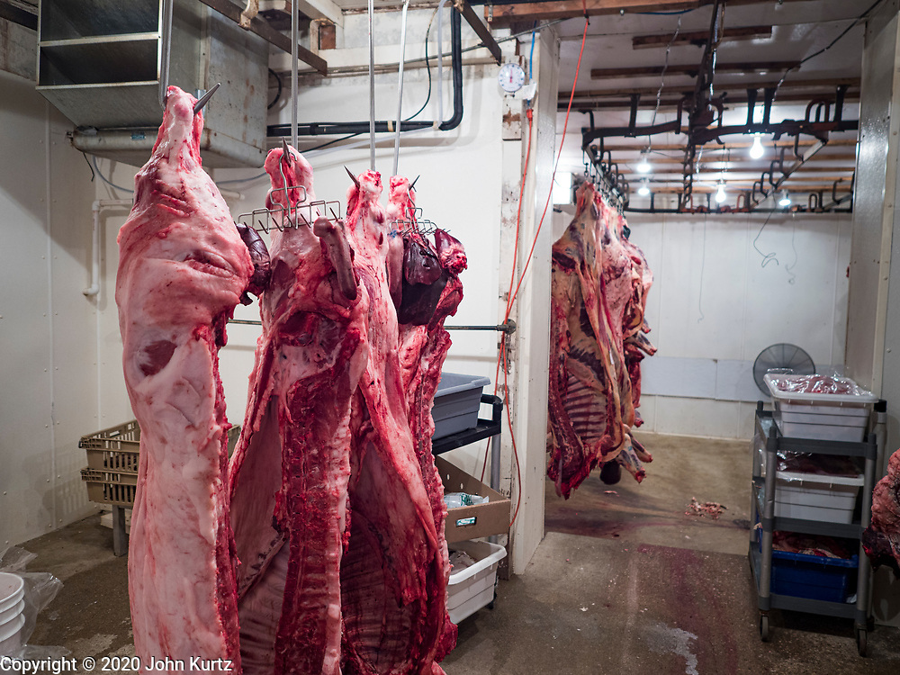 30 APRIL 2020 - STANHOPE, IOWA: Sides of beef and pork handing in Stanhope Locker and Market, in Stanhope, Iowa. The family owned meat locker slaughters and butchers beef cattle, pigs, and sheep. The COVID-19 (SARS-CoV-2/Coronavirus) pandemic has spread among employees in the meat packing plants in the Iowa, Nebraska, South Dakota, and Minnesota, forcing many to close or curtail operations. This has resulted in farmers euthanizing thousands of pigs and beef cattle. Pork production has been slashed by about 40% because of the pandemic. Meat lockers and family owned butchering facilities have been swamped with farmers and ranchers trying to sell their livestock to them rather than the meat packing plants, but the meat lockers are backed up by the huge increase in supply. Many meat lockers are now full through the end of the year. Stanhope Locker and Market doesn't have any openings for slaughtering and butchering either cattle or pigs until mid-December 2020.         PHOTO BY JACK KURTZ