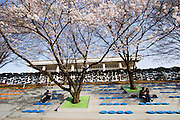 Yeoido Island. Hundreds of Thousands of Seoulites enjoy the Cherry Blossom in Yunjungno, the street around the National Assembly lined by cherry trees which has been cleared from traffic for these days. Also the park surrounding the National Assembly has been opened to the public.