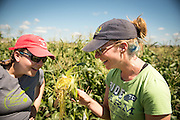 Tess Peters and Virginia Moore are graduate student of sweet corn under Bill Tracy at the University of Wisconsin, Madison.