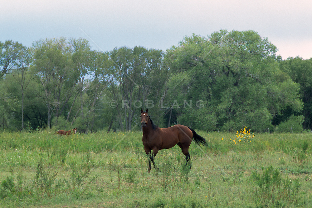 Horse in a wood lined pasture looking at camera