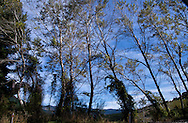 Forest and geology of Takaka Hill Highway, New Zealand