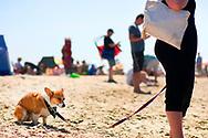 July 25. 2015 - SoCal Corgi Beach Day at Rosie's Dog Beach in Long Beach, CA.