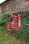 Brittany, FRANCE,  Autumnal leaves on the rear porch at; Les Champs Pledran,<br /> Plenee Jugon. Wednesday  21/10/2015.   [Mandatory Credit; Peter Spurrier/Intersport-images]