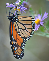 Early Fall; Nature; Butterflies