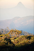 Sri Lanka. Horton Plains National Park.  It lies at a height of more than 2,000 m in the central highlands This is a key wildlife area. Species found here include Leopard, Sambar and the endemic Purple-faced Langur. All highland endemic birds are found here, including Dull-blue Flycatcher, Sri Lanka White-eye, Sri Lanka Wood Pigeon, and Sri Lanka Bush Warbler. Yellow-eared Bulbul and Black-throated Munia are widespread throughout the highlands.The park also has a well-visited tourist attraction at World's End, a sheer precipice with a 1,050 m drop. The return walk passes the scenic Baker Falls.