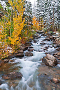 Fresh snow on fall aspens along Bishop Creek, Inyo National Forest, California USA
