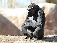 February 7, 2015: Oklahoma City Zoo