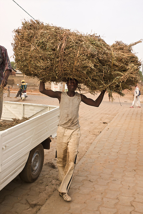 Moussa Atta's nephew carries the hay for &quot;Danda&quot; on his head.<br />  <br /> Le neveu de Moussa Atta porte le foin pour &laquo;Danda&raquo; sur la t&ecirc;te.