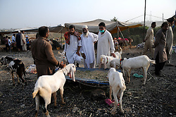 ISLAMABAD, Sept. 12, 2016 (Xinhua) -- People buy goats at a livestock market for the Eid al-Adha festival in Islamabad, capital of Pakistan, Sept. 12, 2016. Eid al-Adha, the Festival of Sacrifice, is celebrated by Muslims around the world by slaughtering camels, goats, sheep and cattle in commemoration of the prophet Abraham's readiness to sacrifice his son to show obedience to God. (Xinhua/Ahmad Kamal).****Authorized by ytfs* (Credit Image: © Ahmad Kamal/Xinhua via ZUMA Wire)