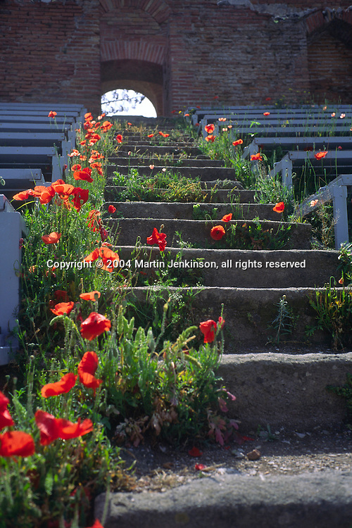Red poppies growing on the steps of Teatro Greco the Roman amphitheatre in Taormina ...., Travel, lifestyle