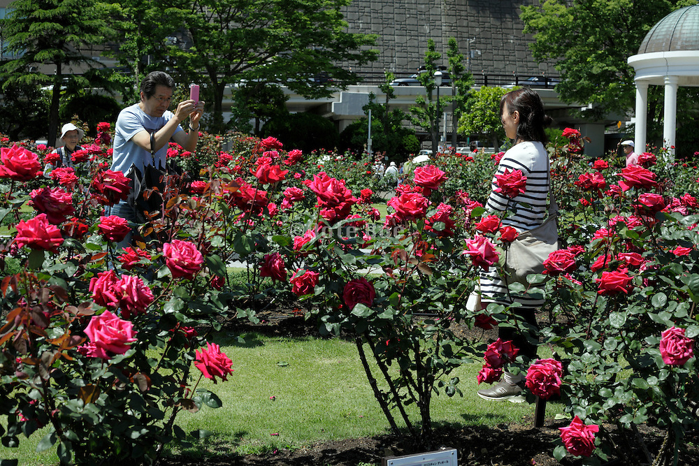 man taking picture of woman in rose garden