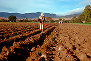 MEXICO, AGRICULTURE Traditional plowing near Oaxaca