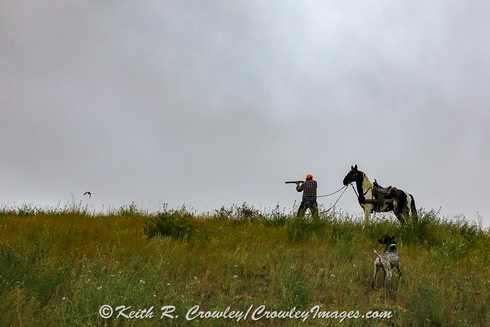 John Zeman,  takes aim at rising sharptails during a Montana horseback grouse hunt.