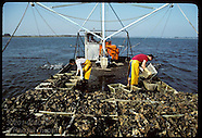 06: OYSTERS DREDGING NON-NATIVES