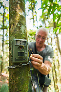 Rimbang Baling Wildlife Sanctuary, Sumatra, Indonesia, August 2017. Volunteers set up a camera trap. International volunteers of Biosphere Expeditions work together with local scientists of the WWF project to  protect the Sumatran Tiger. The 'citizen scientists' survey the rainforest on foot and in boats, looking for tracks, kills, scats and the animals themselves, and setting camera traps. They also work with local people on capacity-building and creating local incentives for tiger conservation. All this in an effort to mitigate human-wildlife conflict and create strategies to ensure the survival of the critically endangered Sumatran tiger into the future. Photo by Frits Meyst / MeystPhoto.com