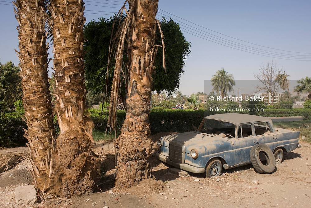 An abandoned Mercedes W110 car under a palm tree in the village of Bairat on the West Bank of Luxor, Nile Valley, Egypt.
