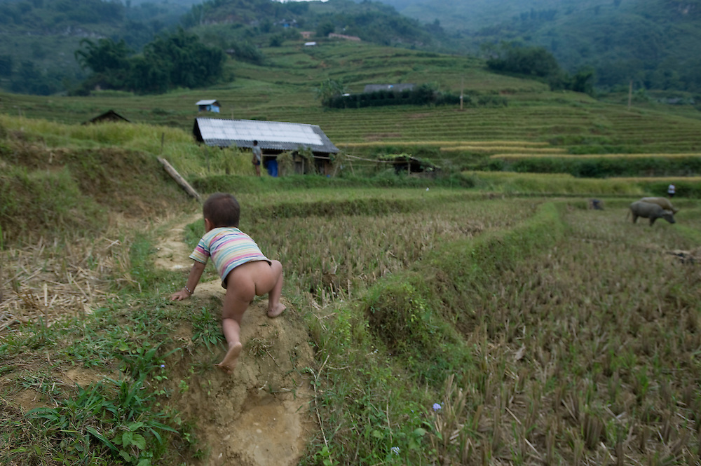 A child makes his way back to him home from the fields in Vietnam/