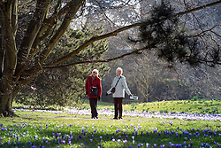 © Licensed to London News Pictures. 11/03/2015. Kew, UK. Two women enjoy the display.  People enjoy the crocus displays at Kew Garden's today 11th March 2015. The display features the variety Crocus tommasinianus. The Uk has enjoyed warm sunny weather this week.  Photo credit : Stephen Simpson/LNP