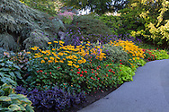 Flowers during late summer at the gardens at Queen Elizabeth Park in Vancouver, British Columbia, Canada