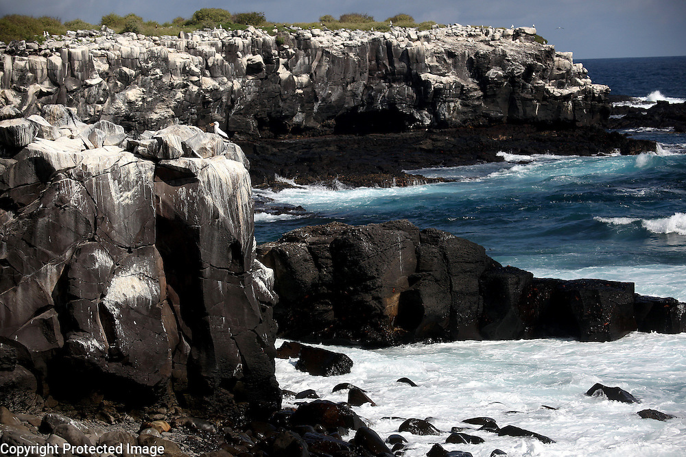 Shore birds nest on the rocky cliffs of Punta Suarez on the Island of Espanola in the Galapagos.  So many birds breed and nest here that the otherwise black volcanic rocks have turned white from bird droppings.