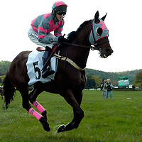 20 October 2007:  Berani with Will Haynes up compete after running through Swan Lake in the $25,000 Moriah Farm Steeplethon during the 70th running of the International Gold Cup Races on October 20, 2007 at the Great Meadow in The Plains, Va.  The race was won by Bon Fleur (1) ridden by Jeff Murphy with Western Fling (2) ridden by Carl Rafter and Berani (4) with Will Haynes aboard finishing 2nd and 3rd.