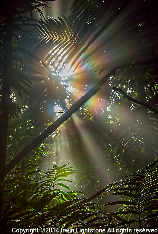Circular rainbows as beam of sunlight refracts through jungle canopy.