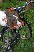 Bicycle with hens in Ngiresi Village, Tanzania.