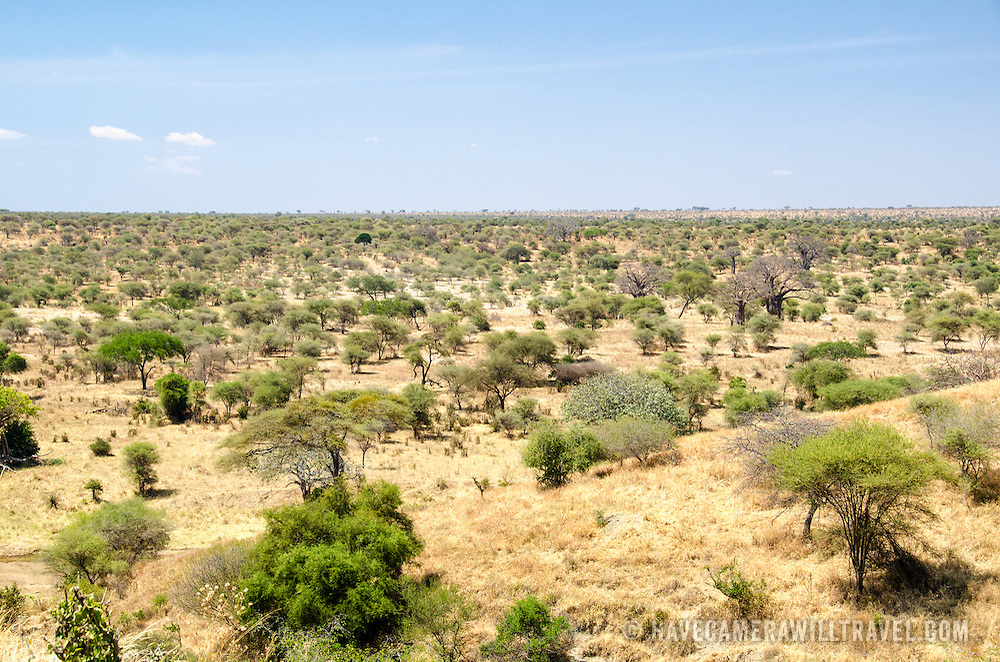 An elevated view of the landscape at Tarangire National Park in northern Tanzania not far from Ngorongoro Crater and the Serengeti.