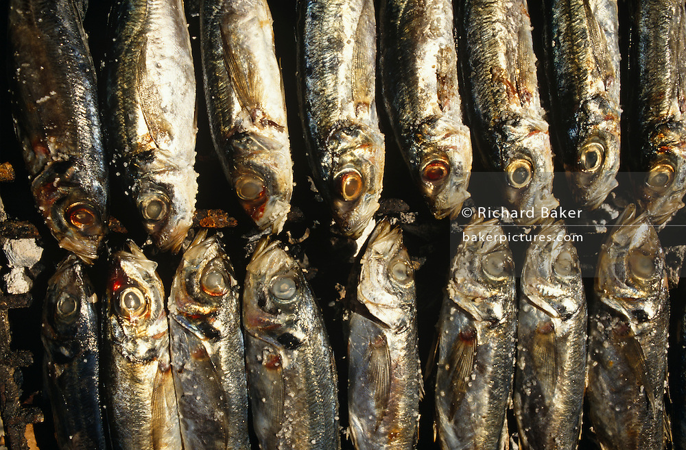 A tray of sardines fry on an outdoor grill in the Bairro Alto district - or Upper City - the oldest of Lisbon's residential quarters. We see in detail 16 fish (sardinhas assadas in Portuguese) all lying in the sunlight on their sides in neat, parralel rows with their clouded eyes staring up towards the viewer. They still have their silvery, scaley skin and Portuguese sardines are traditionally be served with finely-chopped potatoes, considered to be the sweetest and fattest sardines in the world. In Portugal, more than 60 percent of the national sardine catch is consumed fresh: 12 pounds a person, on average, compared to only 2 pounds of the fish canned. The sardine season - when the fish are plump and juicy - lasts from the end of May to the end of October, although the fat fish can keep coming until December. Lisbon's Bairro Alto quarter is located above Baixa and developed in the 16th Century. Suffering very little damage in the earthquake of 1755, it remains the area of most character and renowned for its residential and working quarter for craftsmen and shopkeepers. At night, life takes on a diferent personality when bars and up until the 60s, prostitution gave the district a bad reputation in the past but nowadays tourists and the chic frequent its streets and traditional 'Fado' (classical Portuguese opera) bars.  ..