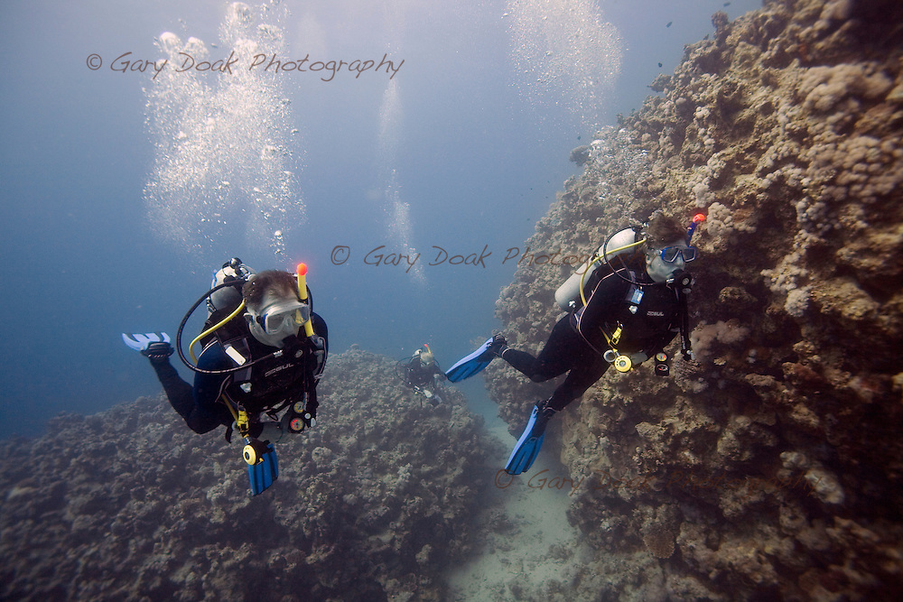 Diving in the Red Sea,Dahab,Egypt