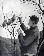 World War I 1914-1918:  French soldier relieving boredom in the trenches by feeding a family of young owls. From 'Le Pays de France', Paris, 17 June 1915.