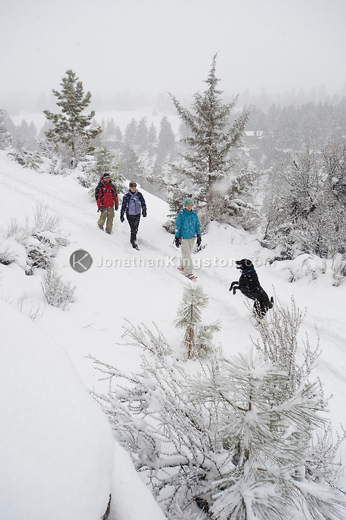 High angle view of three adults and one dog walking on a trail in the snow in Bend, Oregon. (releasecode: jk_mr1036, jk_mr1032, jk_mr1031) (Model Released)