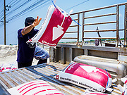 28 MARCH 2018 - SAMUT SONGKHRAM, SAMUT SONGKHRAM, THAILAND: A worker at a salt wholesaler loads sacks of seasalt into a pickup truck during the 2018 salt harvest in Samut Songkhram, about 90 minutes south of Bangkok. Sea salt is made in provinces south of Bangkok by flooding fields with ocean water after the rainy season. As the fields dry out from evaporation, workers go into the fields and gather the salt left behind.         PHOTO BY JACK KURTZ