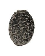Mediterranean Stick Insect egg - Bacillus rossius