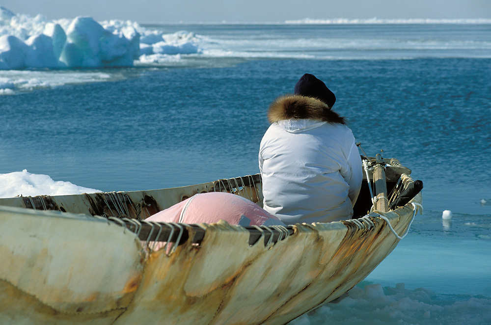 Barrow, Alaska, Member of a native whaling crew waiting in a traditional umiak on the edge of the Chukchi Sea ice. The umiak will be launched when a bowhead whale is spotted close enough to shore.