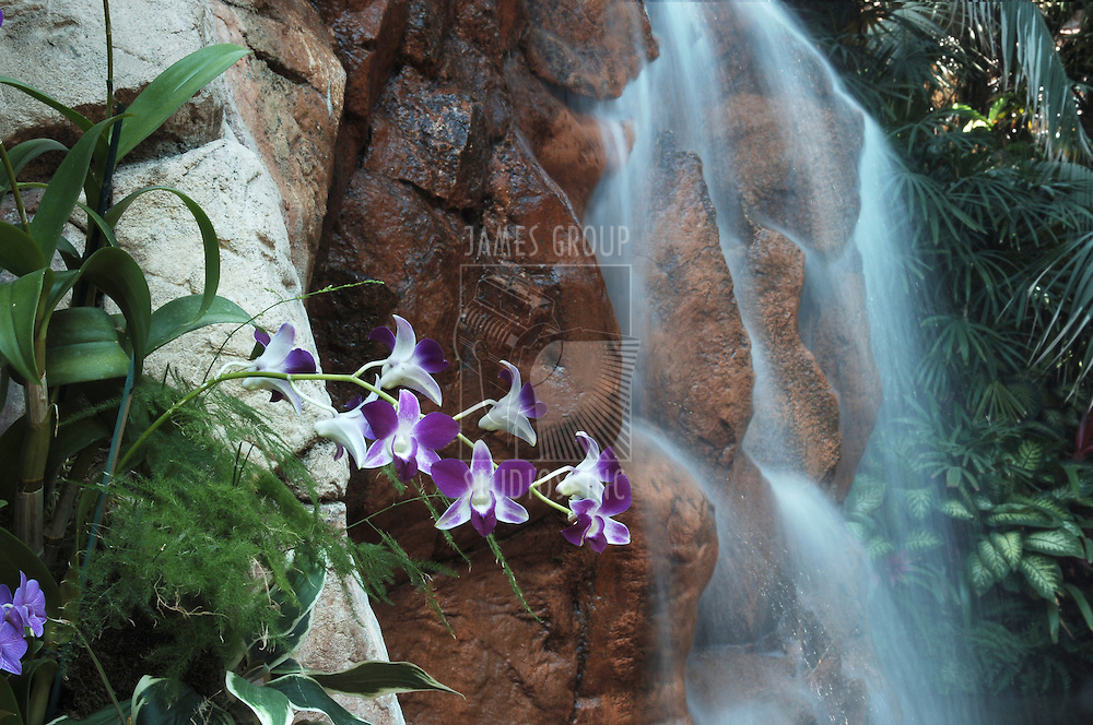 waterfall with flowers in foreground