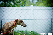 Paul, 2015-06 NJGAP Adoption intake
