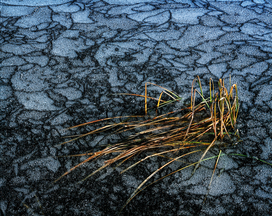 Frozen blades of grass trapped in icy Trinity Lake surface with patterns of frost and ice in Central Idaho.