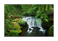 Whatcom Falls, Bellingham Washington
