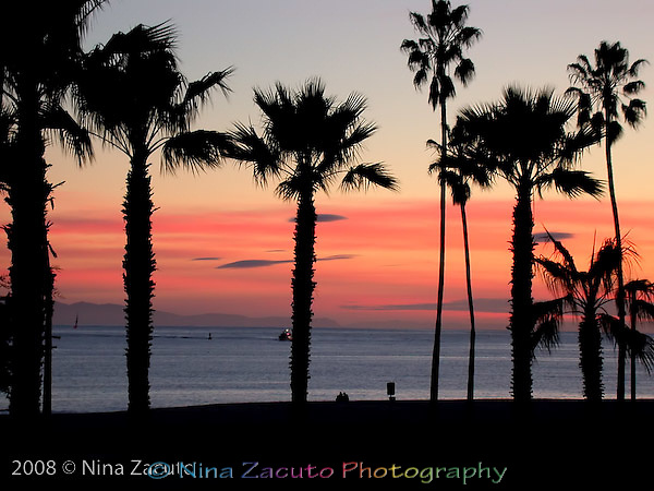 Palm trees silhouetted against a vivid sunset off Santa Barbara, CA